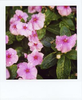 Polaroid_SX70_600_8_6.jpg.jpg