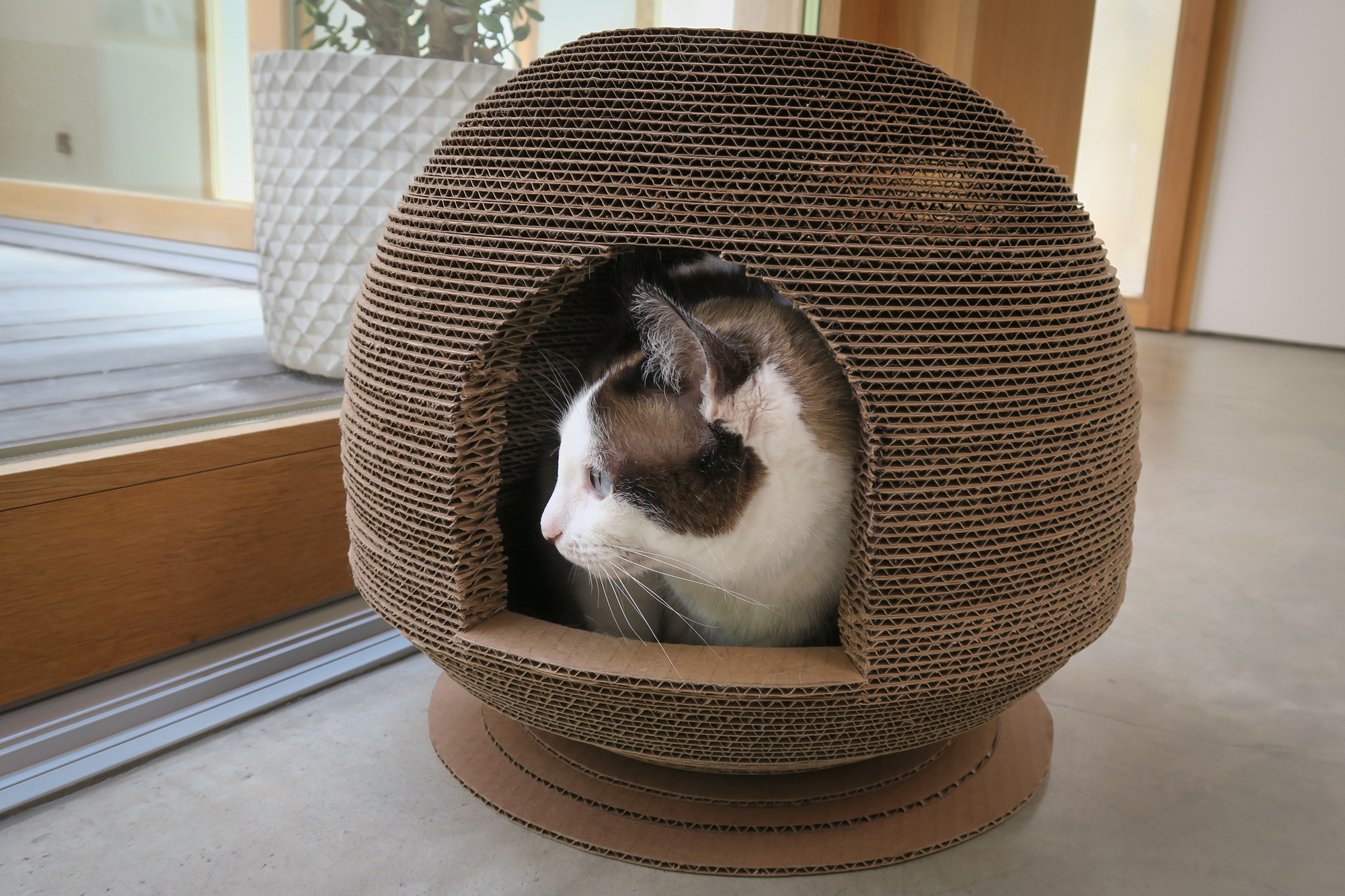Cardboard Cat Dome House