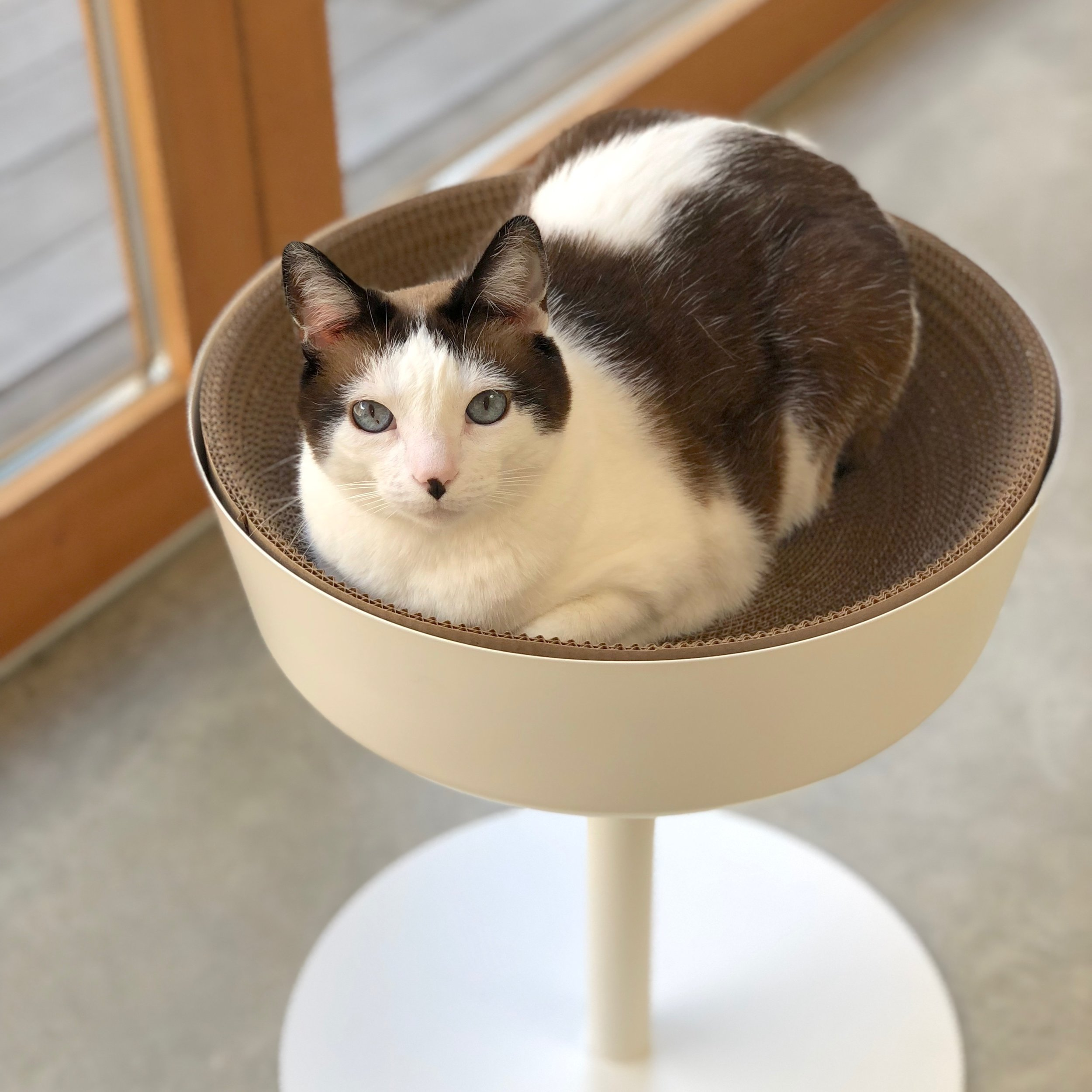 IKEA Cat Bed Hack