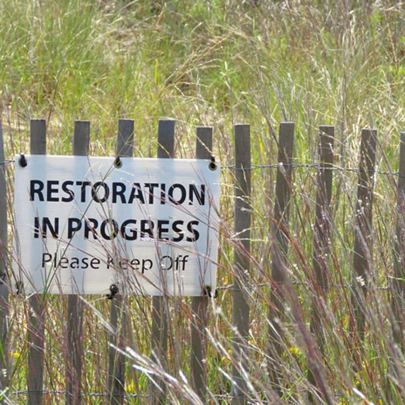 Dunes restoration fence