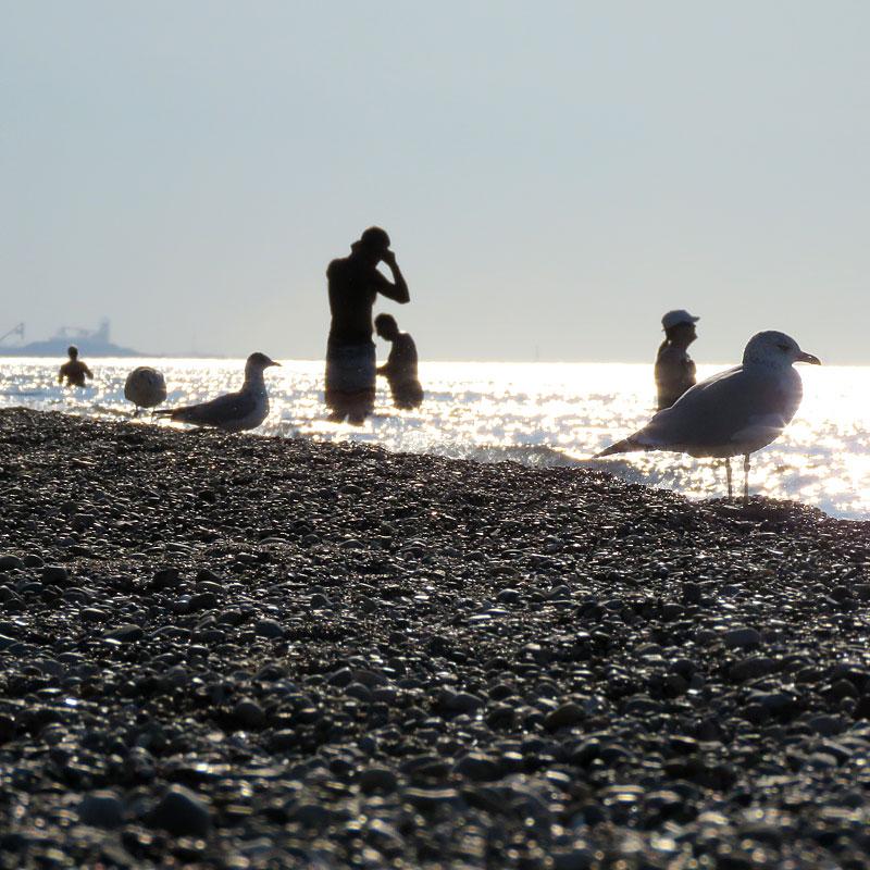 beachbirds_PaulaKovarik