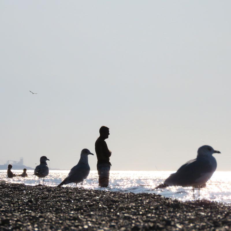 Beachbirds2_PaulaKovarik