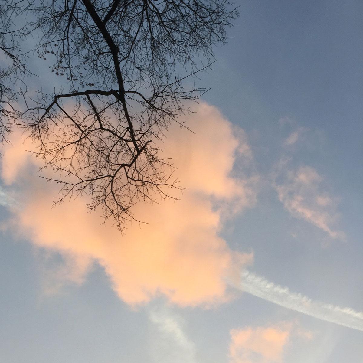 cloud_tree_PaulaKovarik.jpg