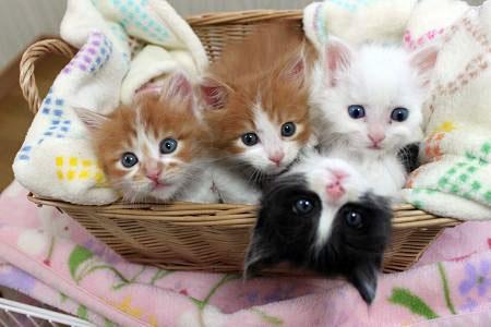 apf_kitten_shower.jpg