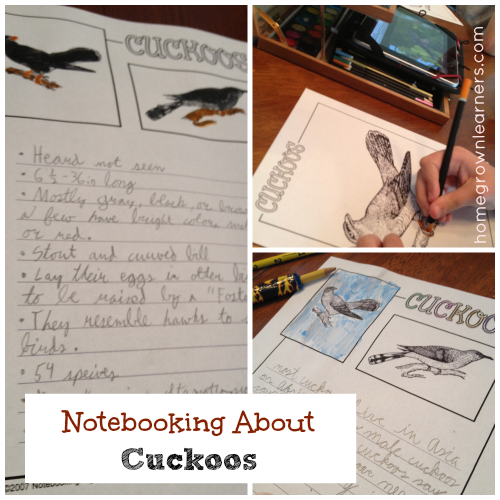 Notebooking About Cuckoos - Notebooking by Suject