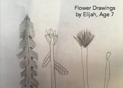Flower Drawings to go along with Miss Rumphius