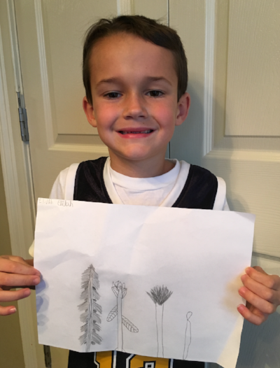 Cultivating Beauty with Children: Activities for Miss Rumphius/Flower Drawings