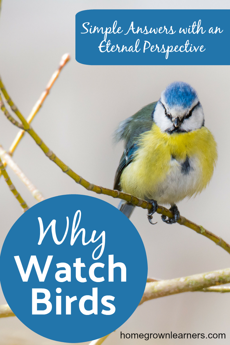 Why watch birds?   Study birds and learn of God's Providence.