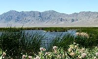 Visit Fish Springs National Wildlife Refuge. Click on Fish Springs for more information.