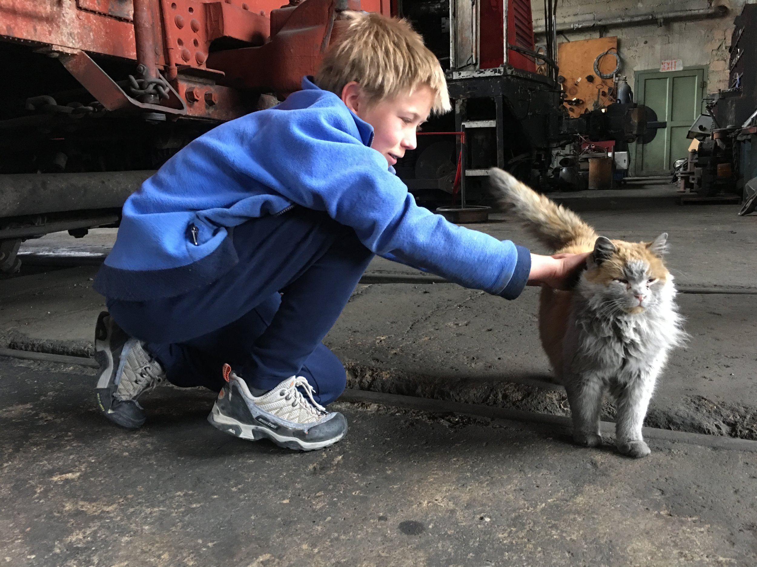 "guest evan meets ""dirt"" - nevada northern railway's famous shop cat. May 19, 2019"