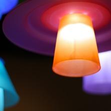 Luminariales
