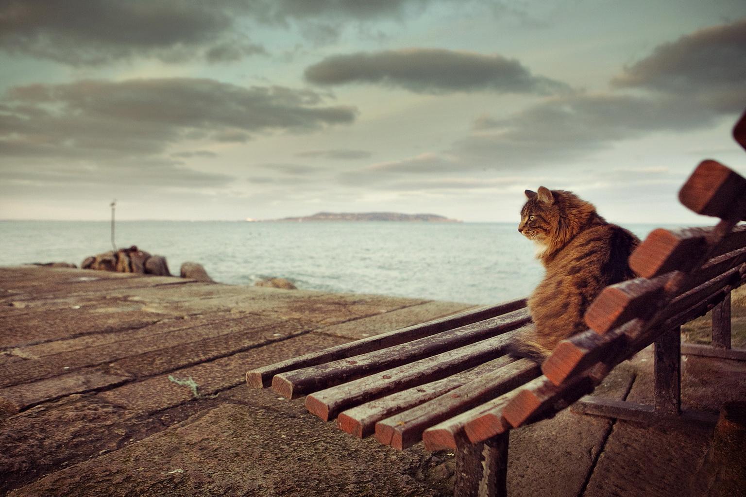 Bullock Harbour Cat, Co. Dublin