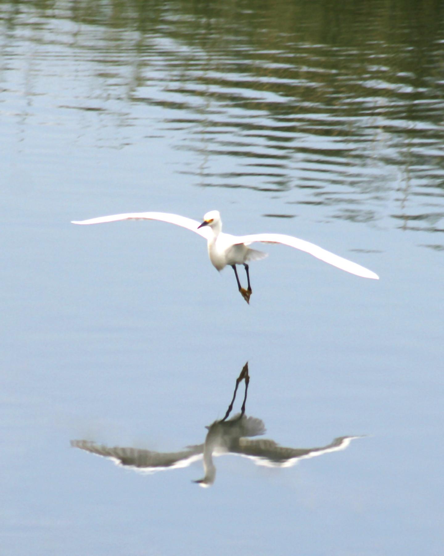 ed 212 fliped Heron 8x10v_3535 copy 2.jpg
