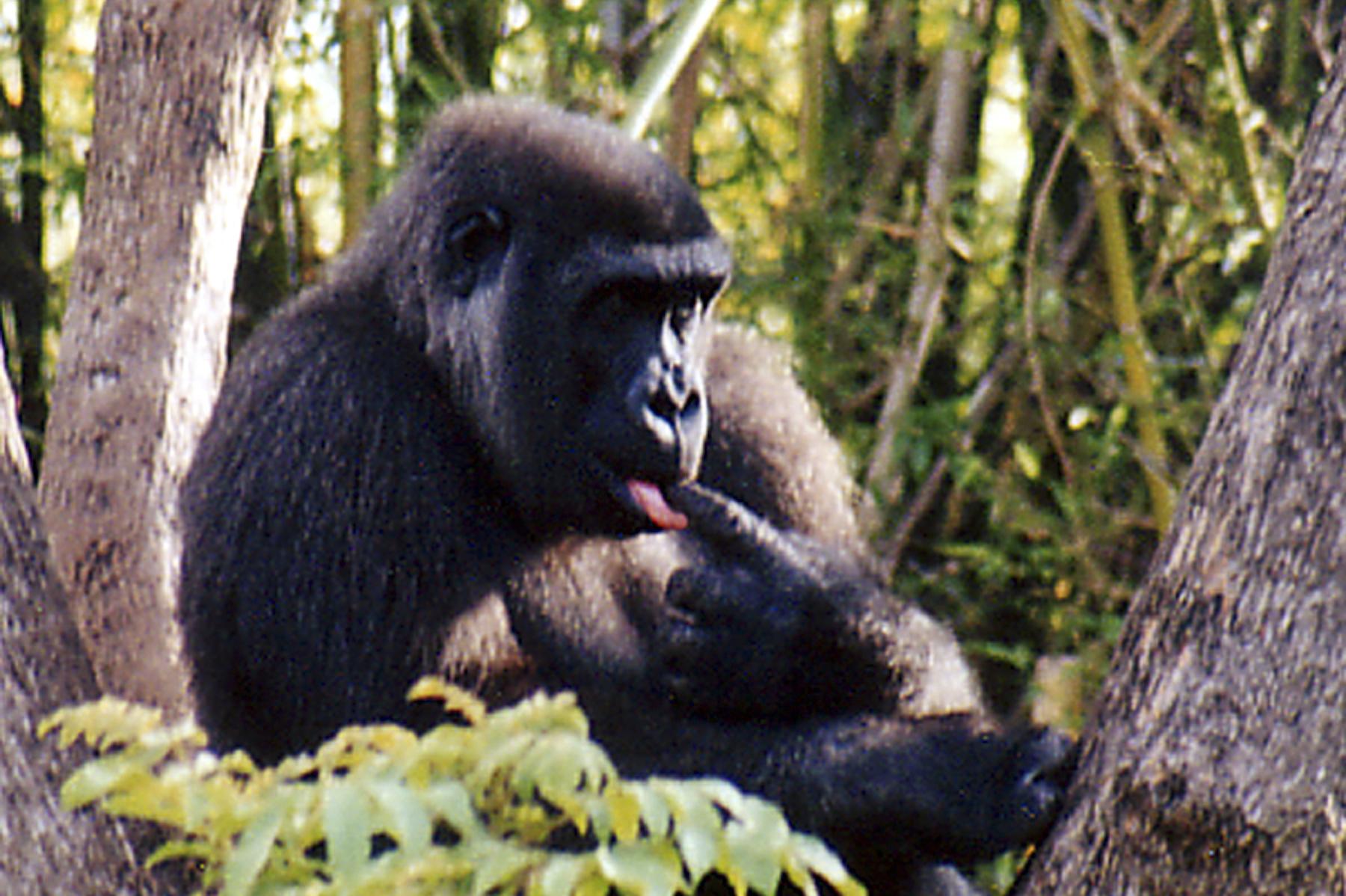 ed 147 4x6 ape 2.jpg
