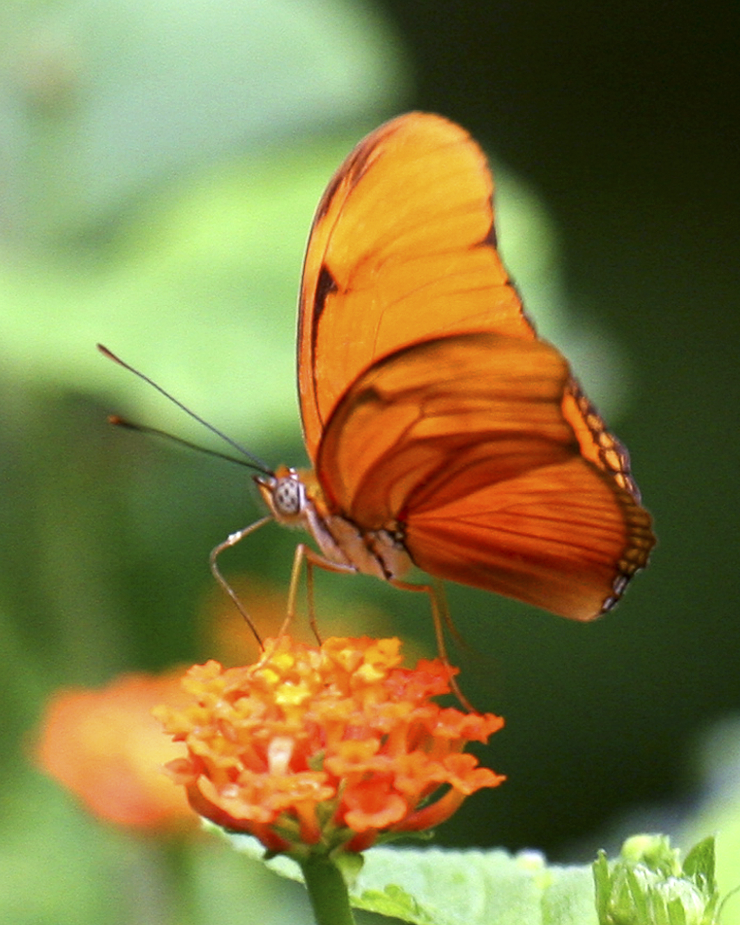 ed 255 IMG_9548 8x10 orange butterfly copy 2.jpg