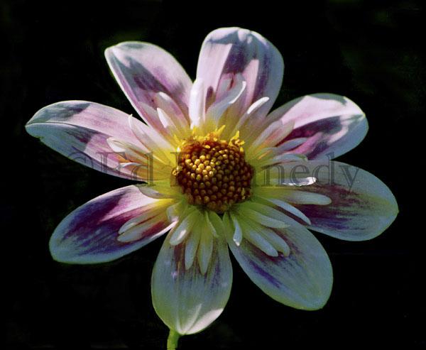 ed 026 res 300+First Flower 1 8x10_.jpg