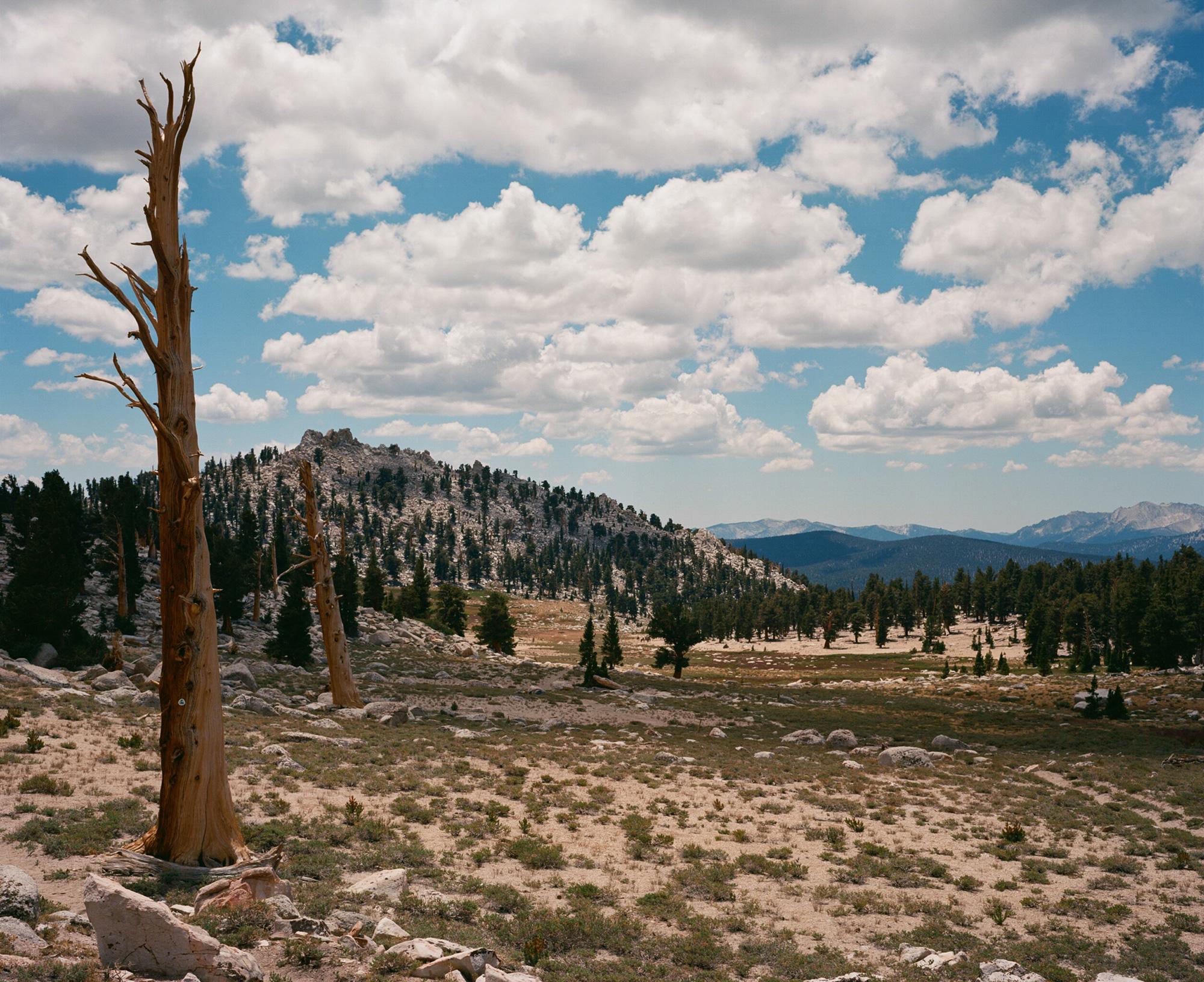 High Sierra -