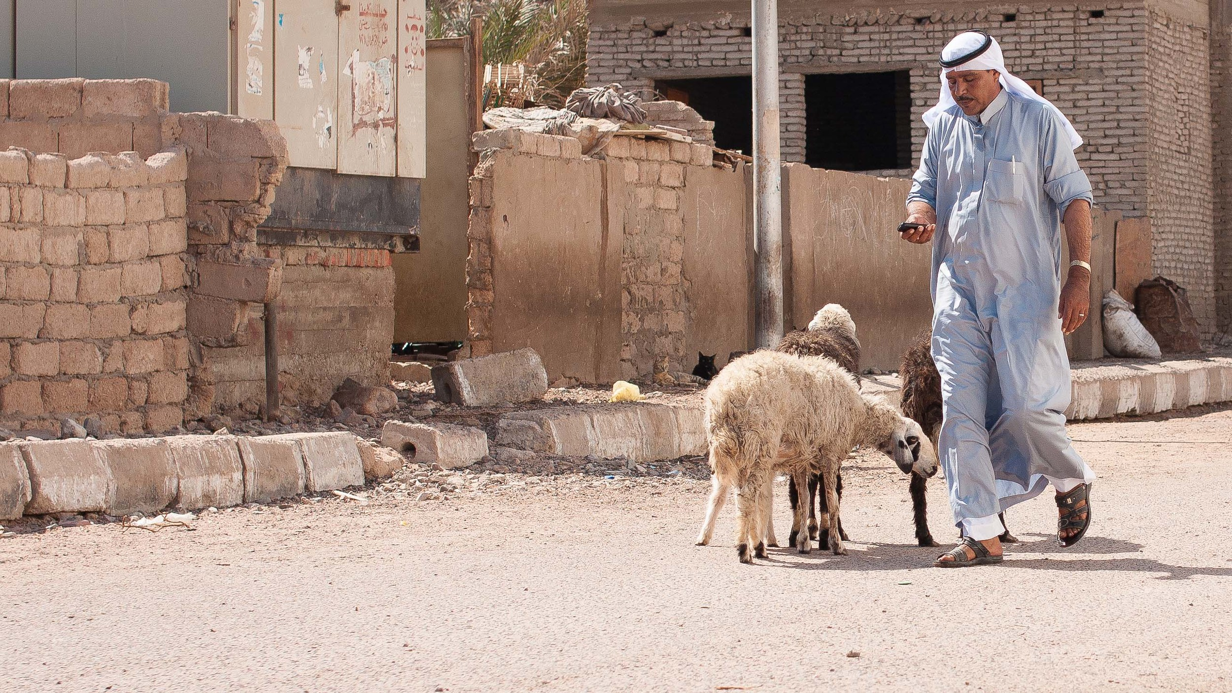 A Bedouin man texts on his phone as he passes goats in the street.