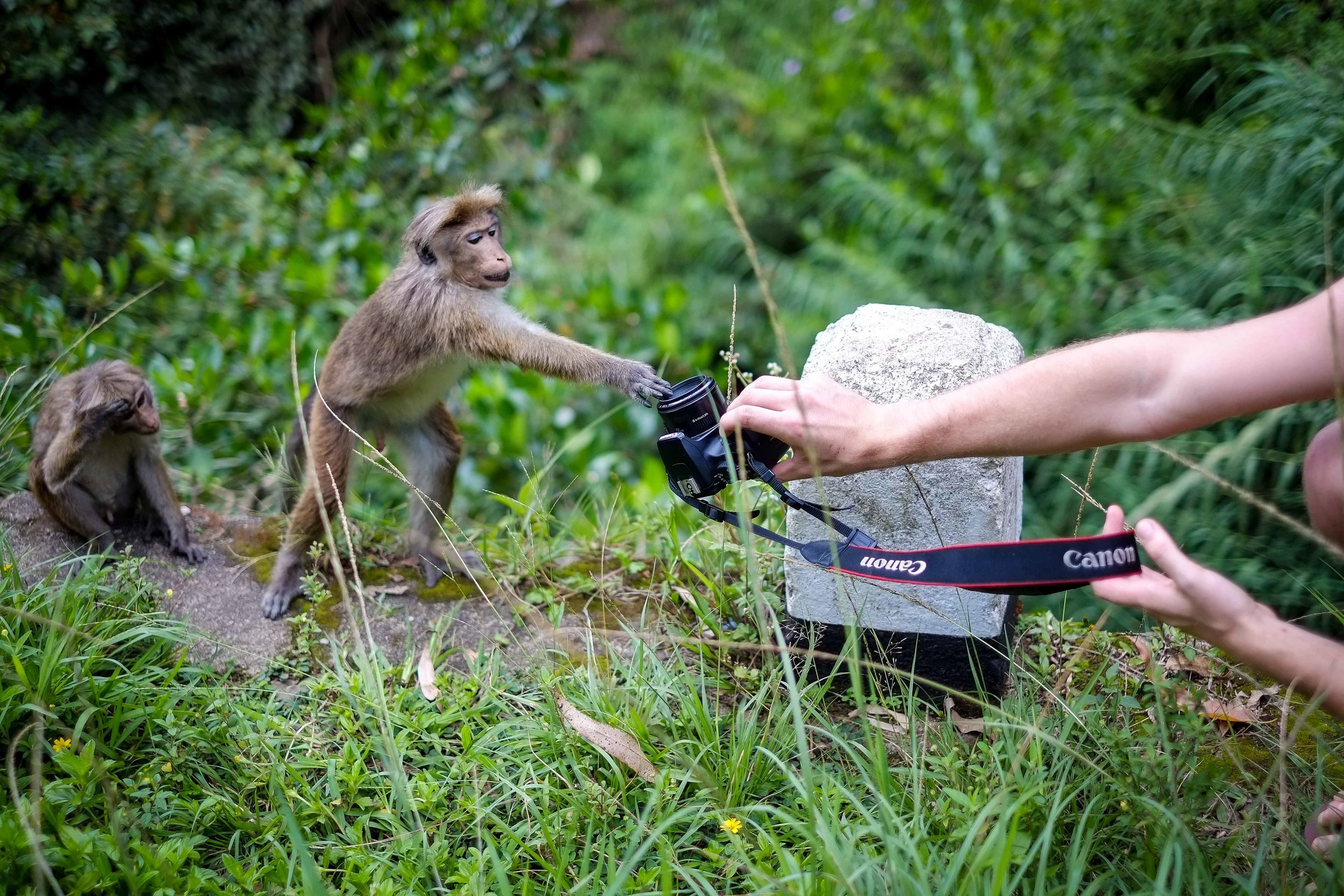 This little guy might just be the next big wildlife photographer.