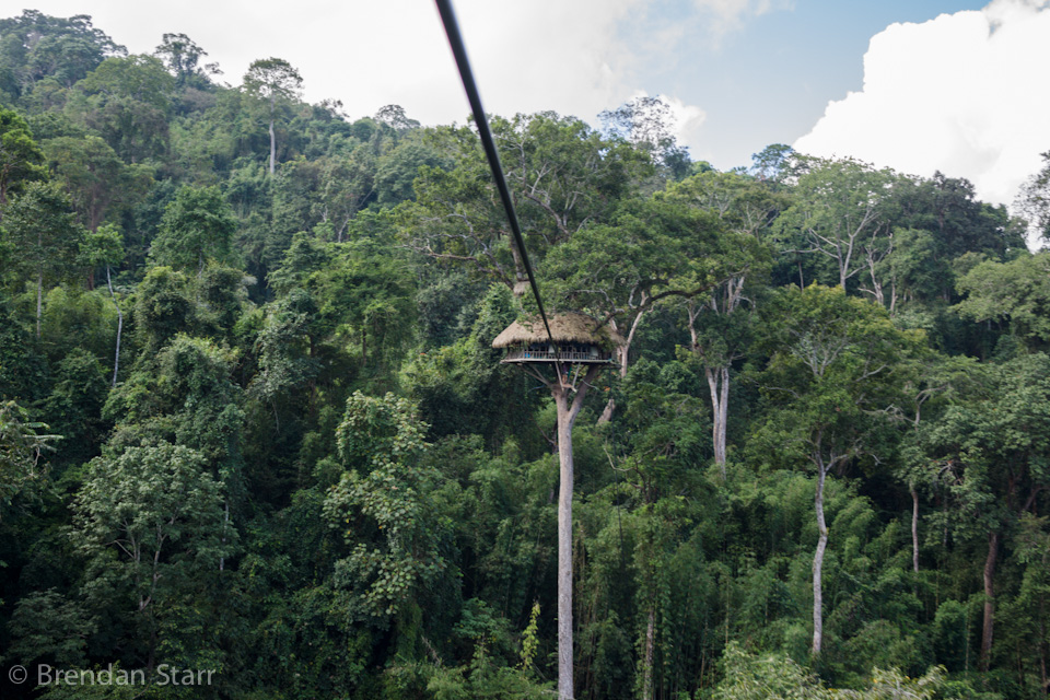 Gibbon Treehouse.jpg