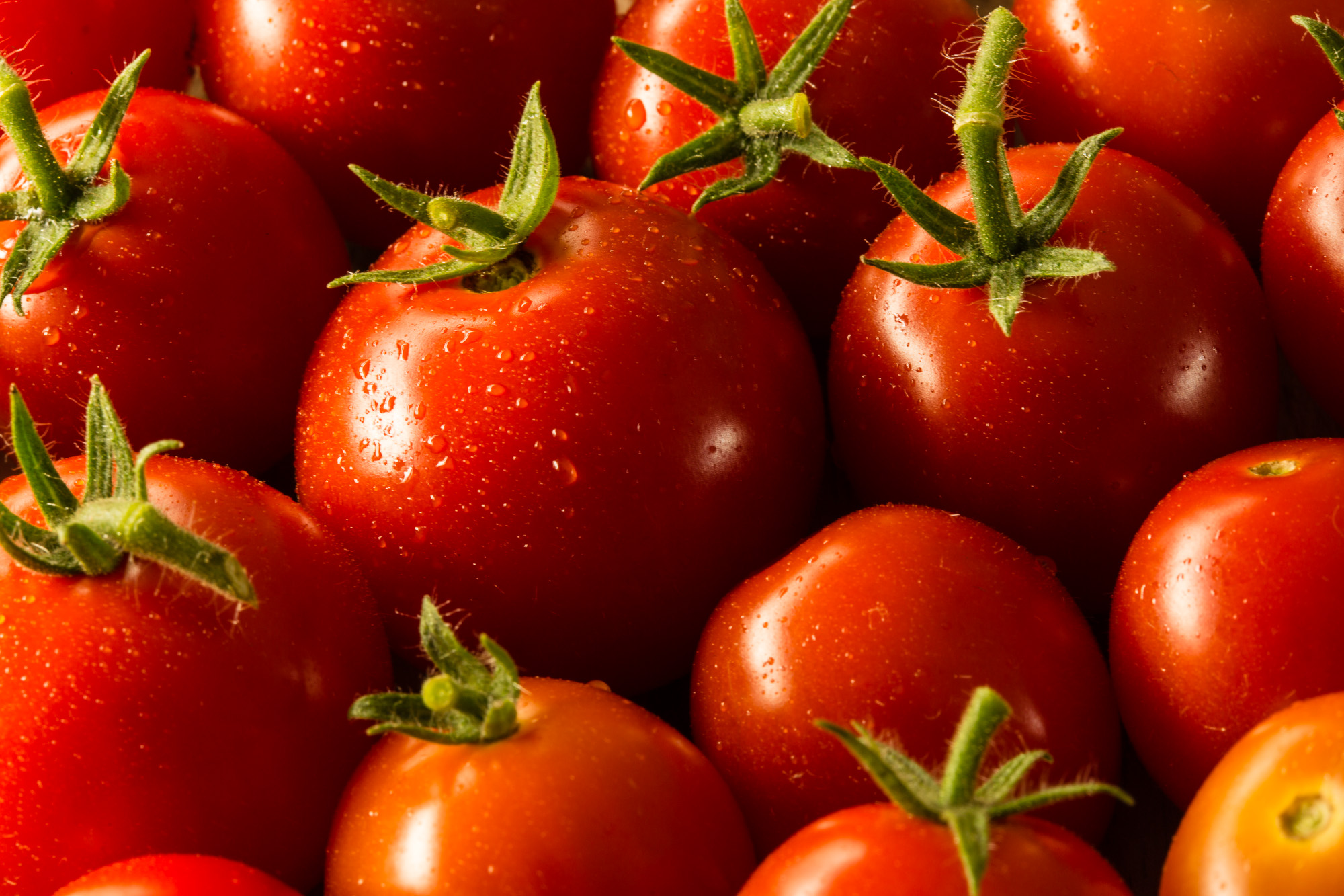 Professional food photo of grape tomatoes. Close up photo. Commercial photography