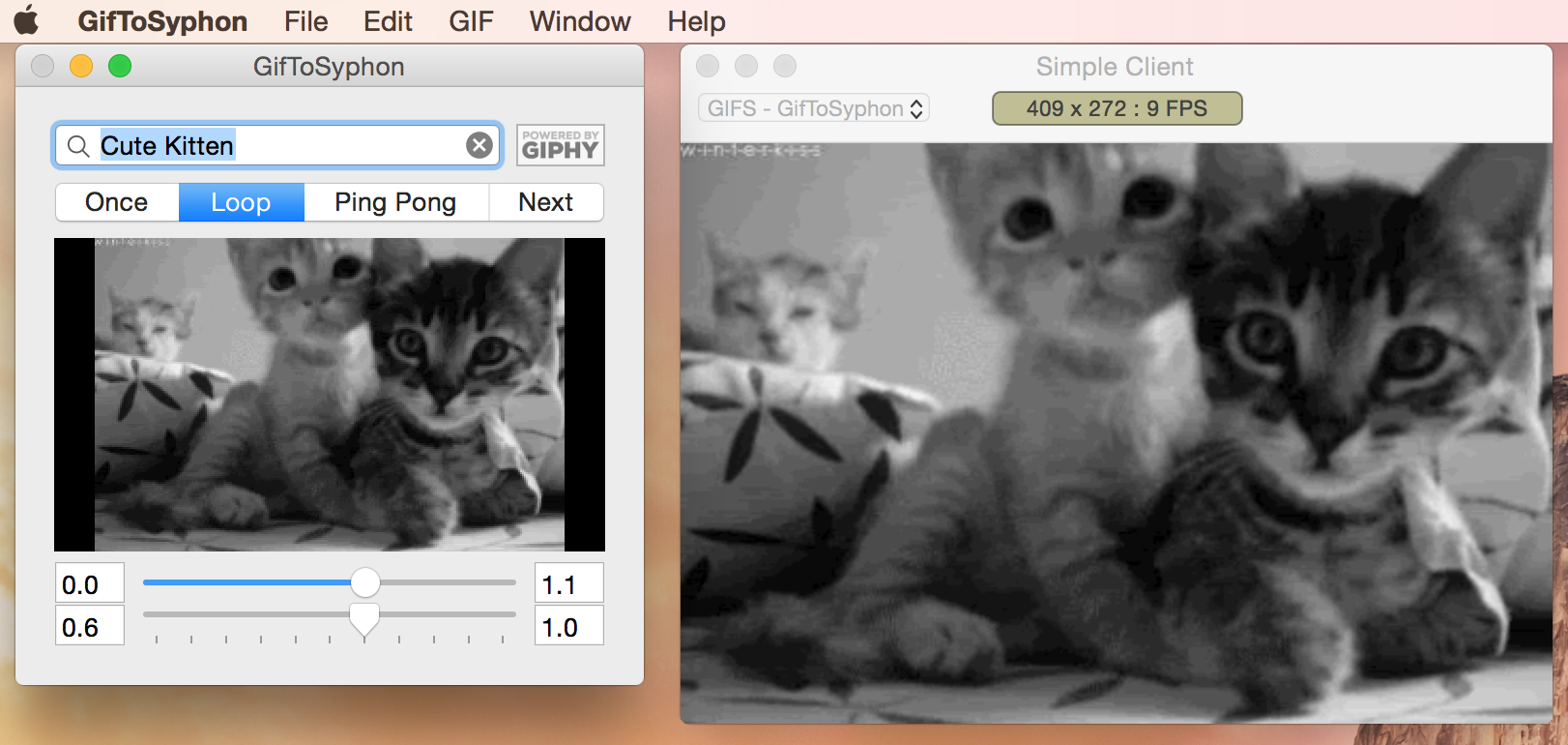 Giphy + Syphon = Instant kittens in your VJ set