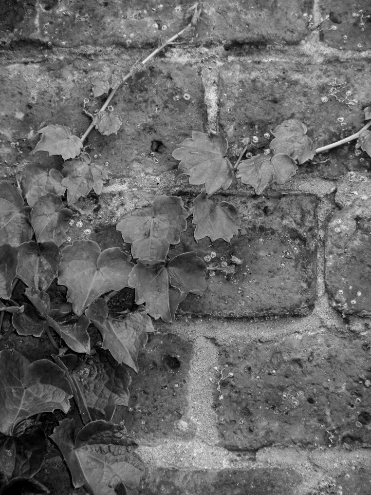 leaves, bricks, Beacon Hill, Charles street meeting house