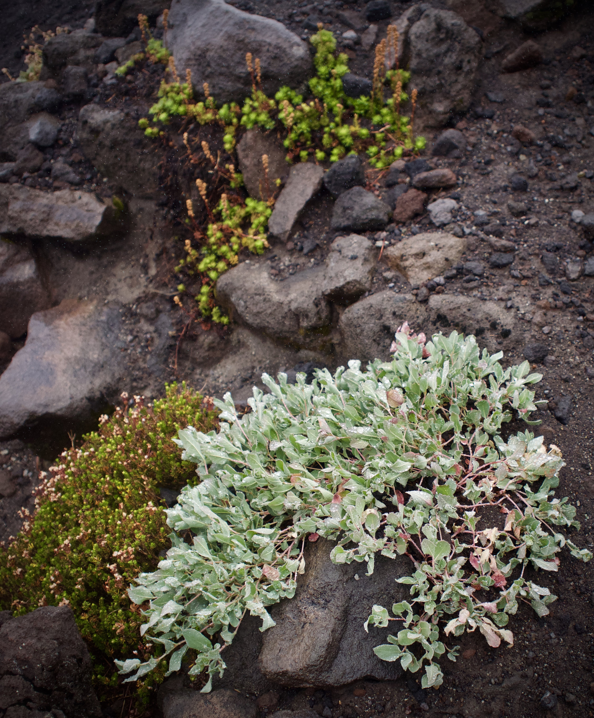 Volcanic Growth