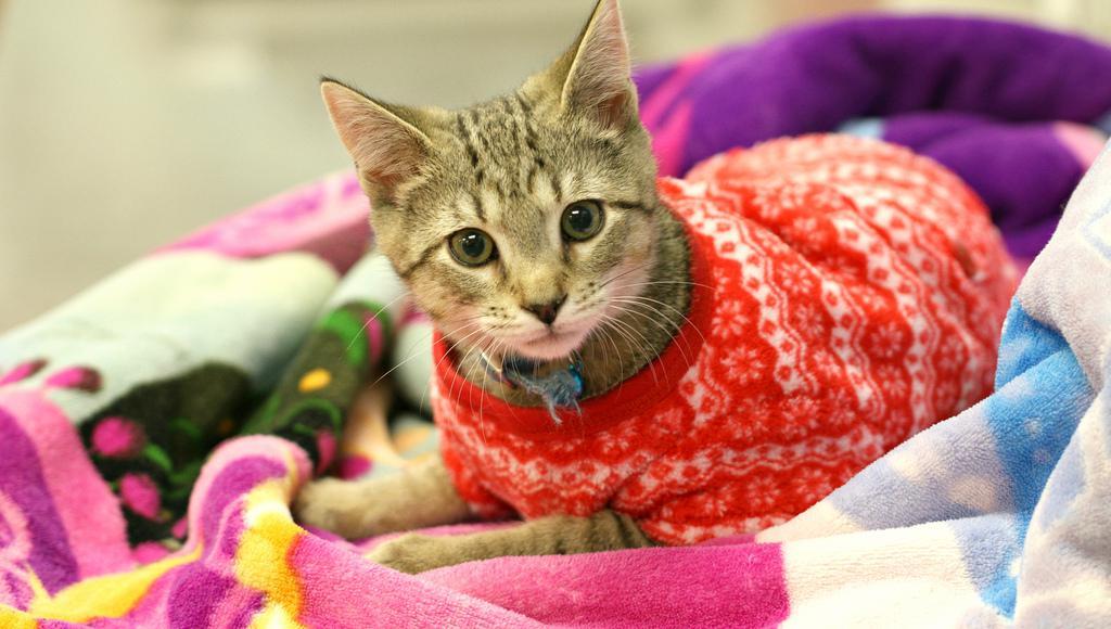cat_in_pajamas_kerry_lee_smith.jpg