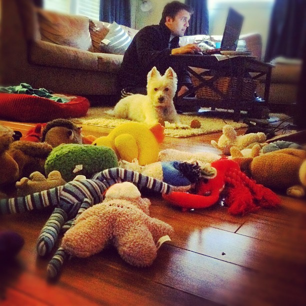 This really sums it up. This dog loves to play and he loves when he has my full attention. And he LOVES his babies.