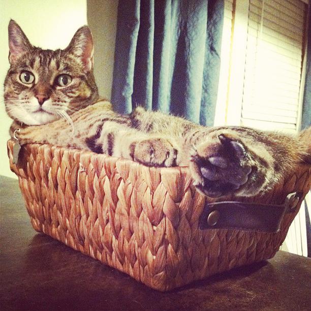 lilly-in-basket.jpg
