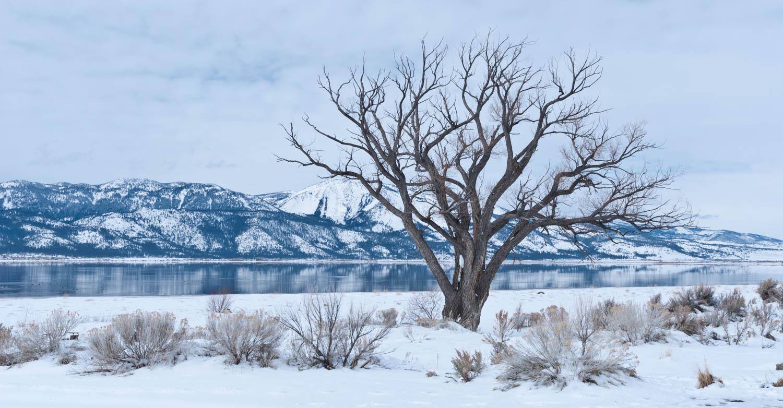 Stark Washoe winter...