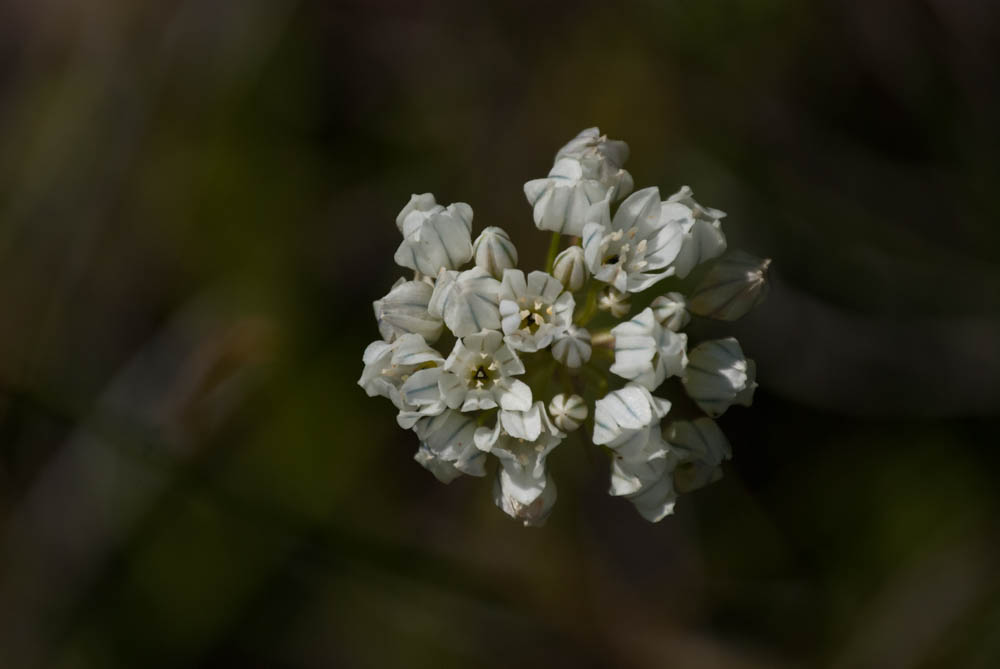 Delicate spring...