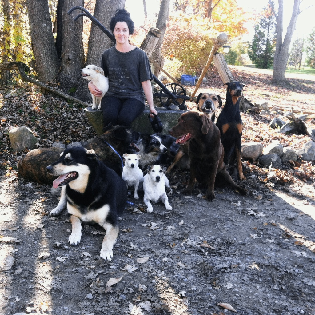 an an afternoon in the field with Mel and The Pack