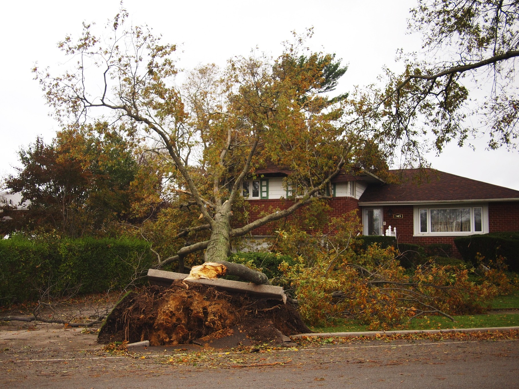 Lots of houses with damage near us.