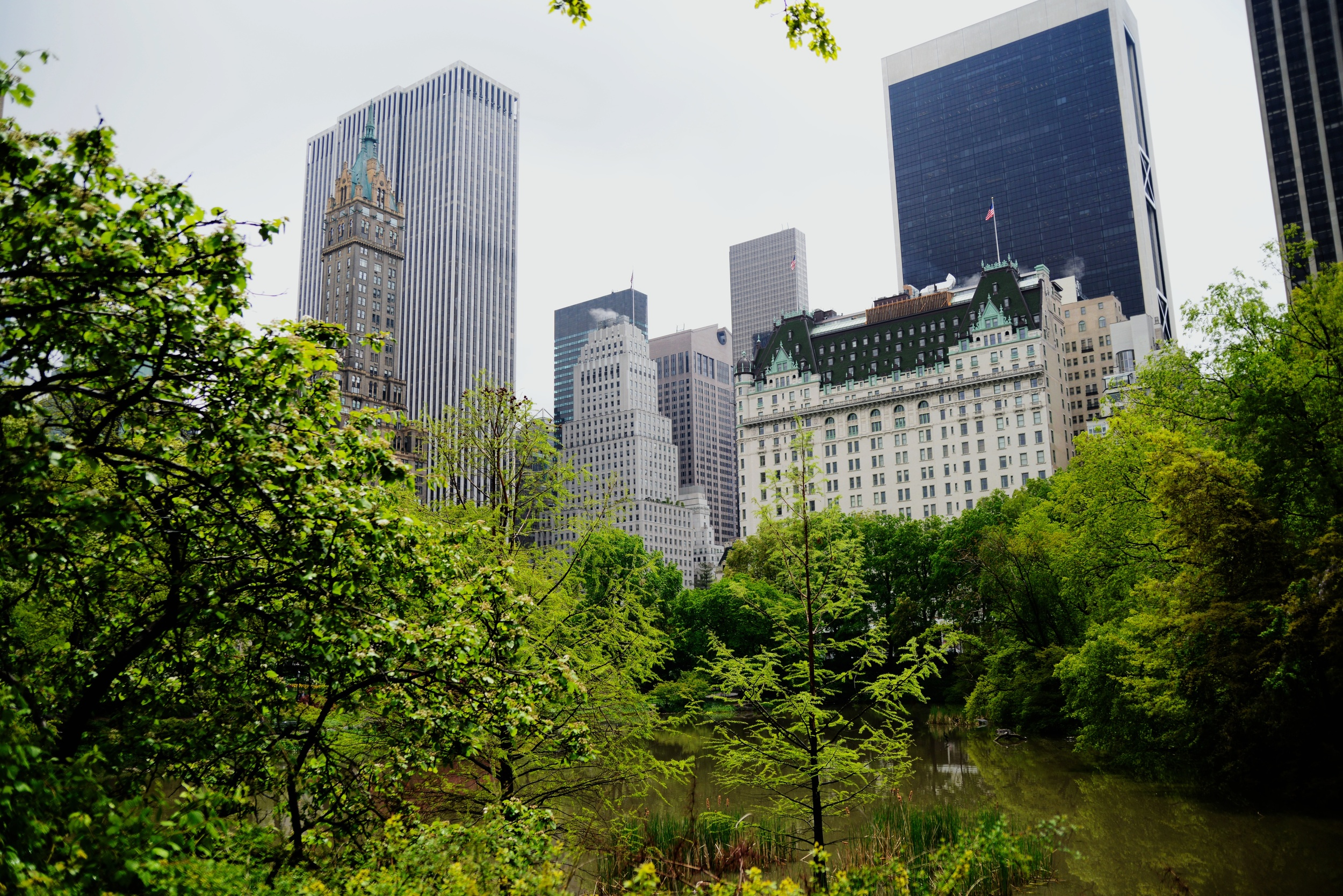 Central Park this afternoon