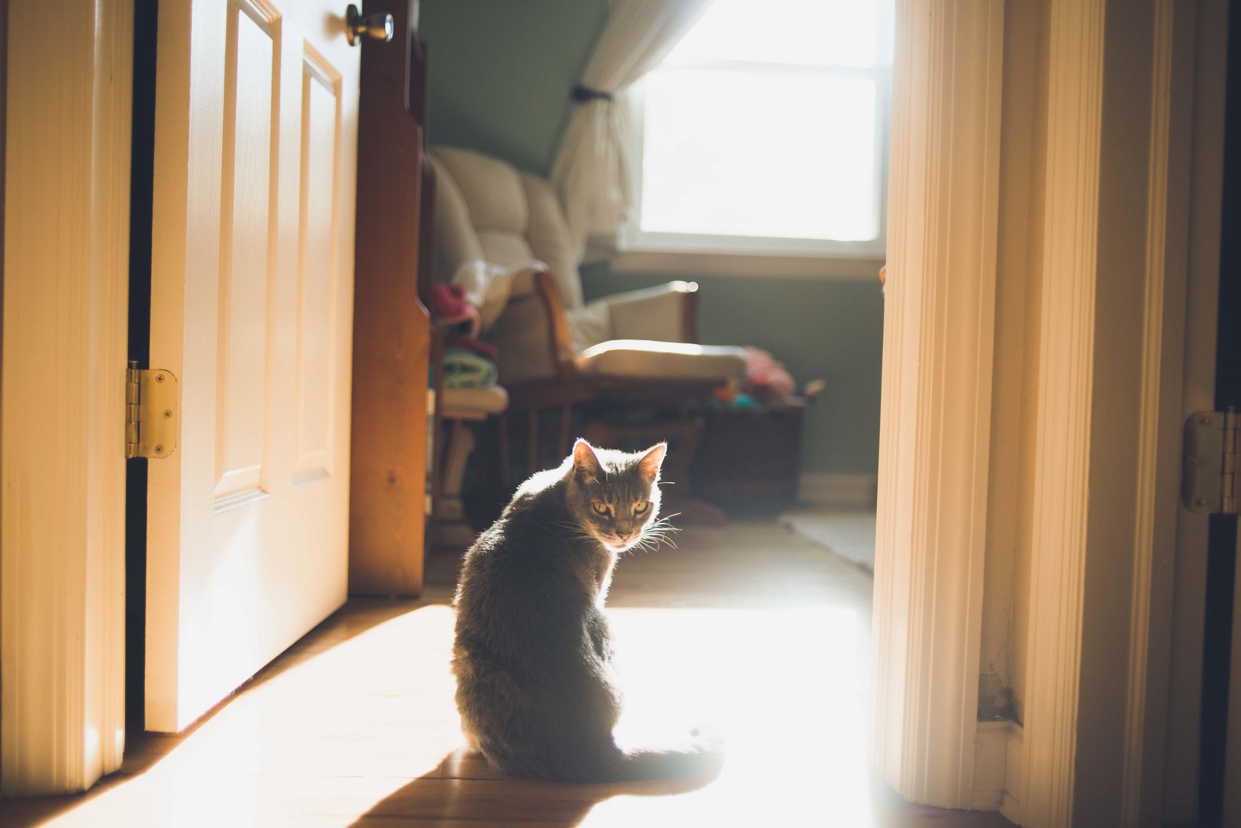 311_tallulah in the morning light.jpg