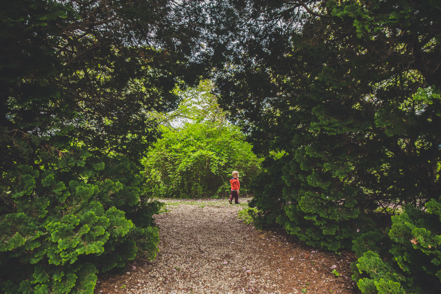 boy-under-green-leaves-francesca-russell-photography-and-films-long-island-family-photographer.jpg