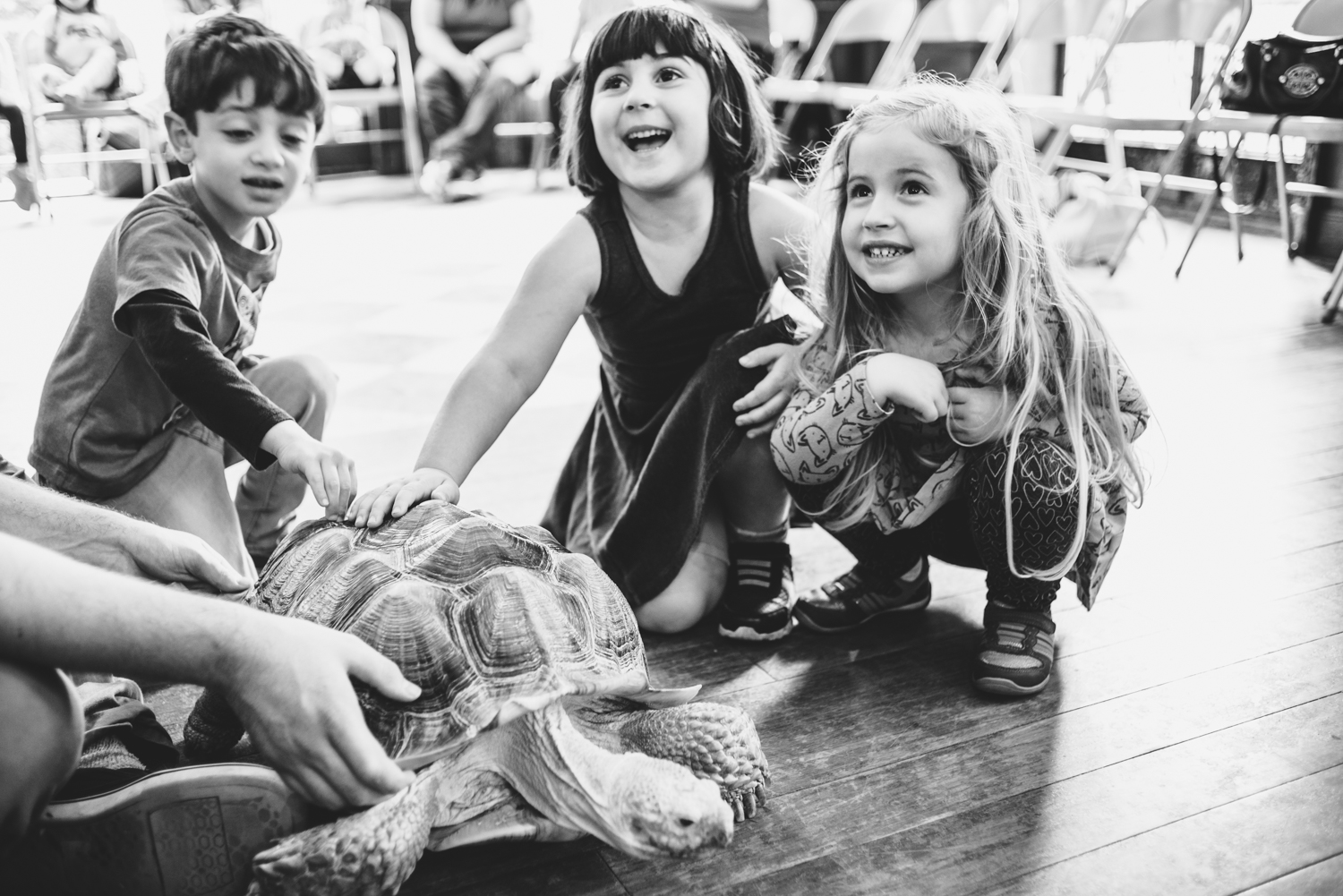 Lila and her friends meet the giant tortoise, Rudy!