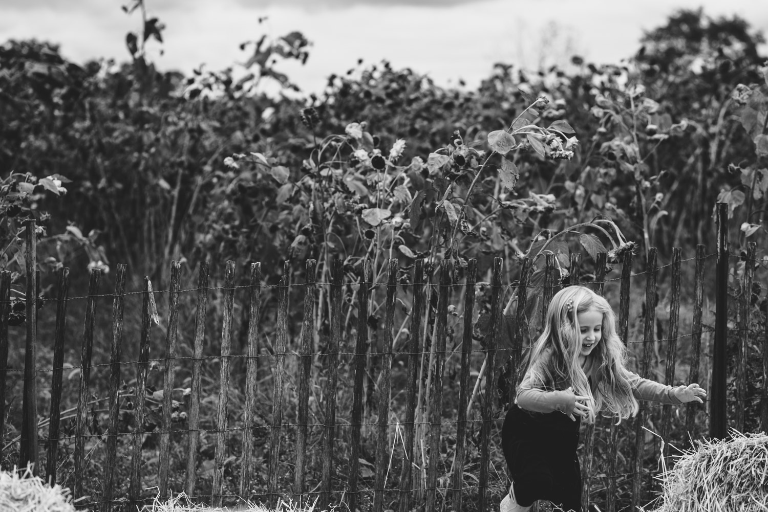 Girl climbing over hay bales with corn stalks behind her.
