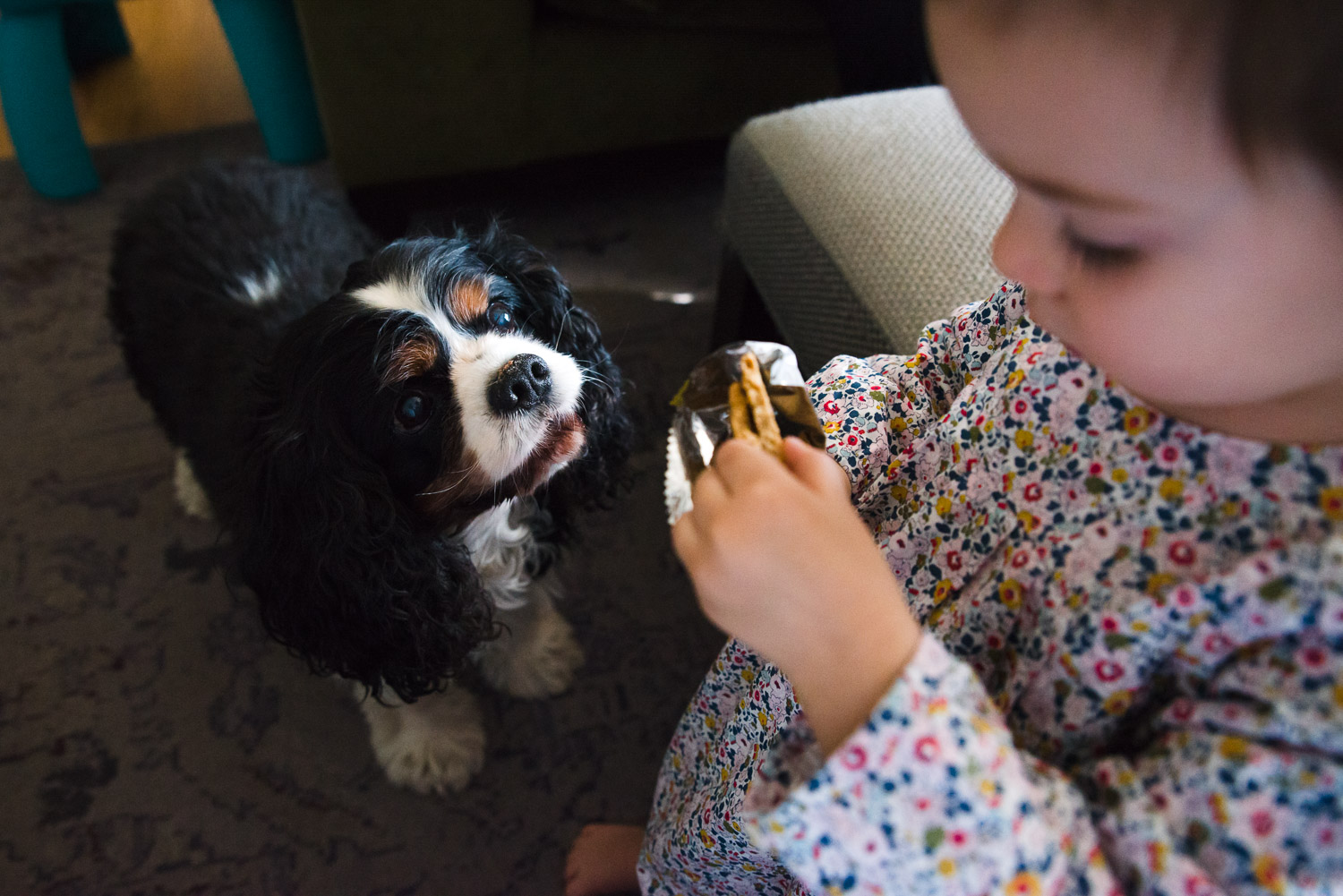 Dog looking longingly at toddler's snack.