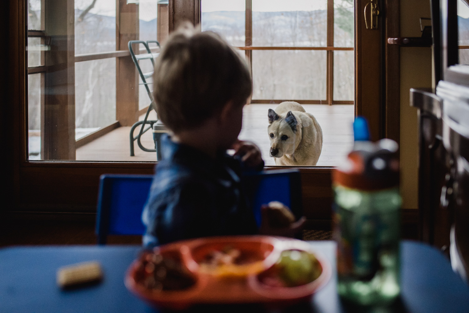 Dog looking forlornly at food on the table through a sliding glass door.