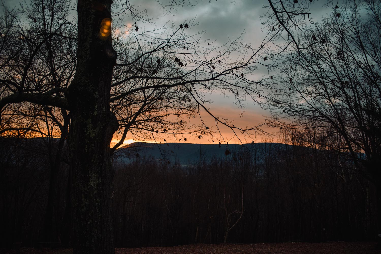 A beautiful sunrise in the woods.