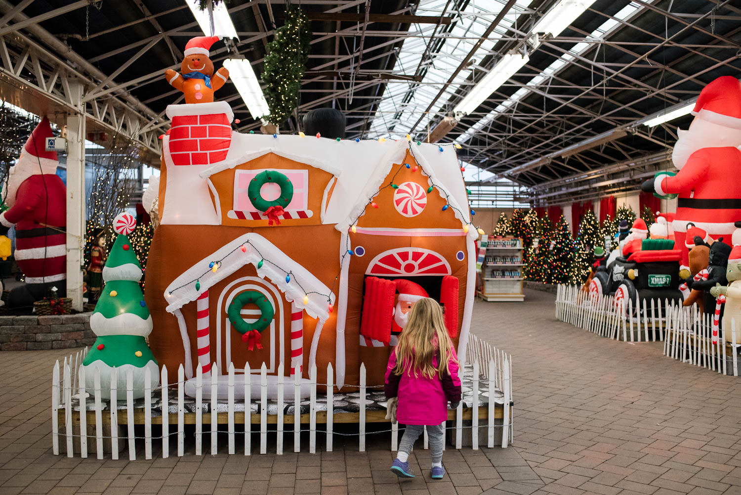 Little girl looking at inflatable Christmas displays at Hicks Nursery.