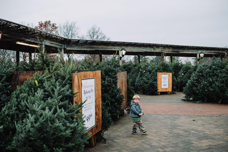 A little boy amidst a sea of Christmas trees at Hicks Nursery.