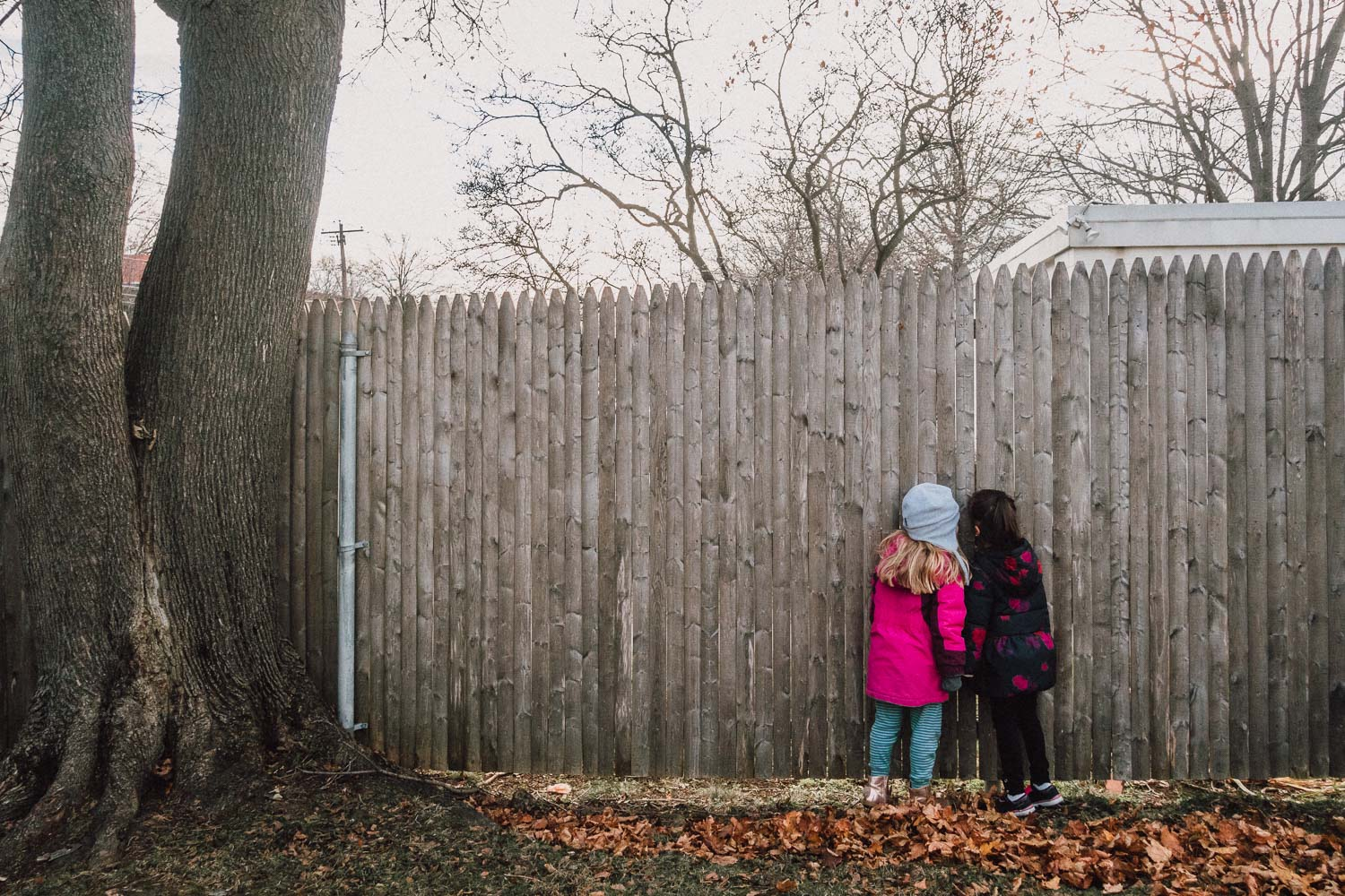 Little girls peeking through a fence.