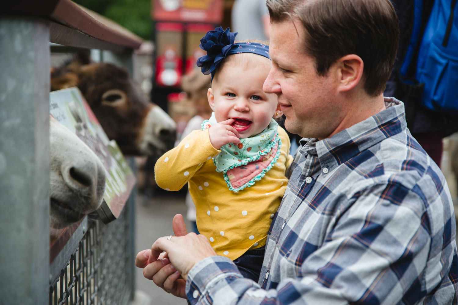 A father and his baby daughter feed a donkey at the Bronx Zoo.