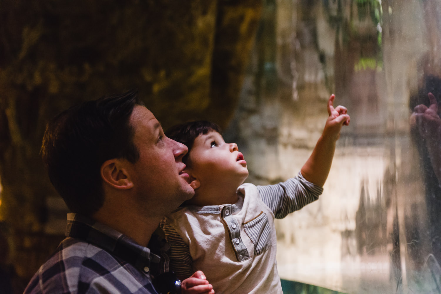 A boy and his father look at an exhibit at the Bronx Zoo.