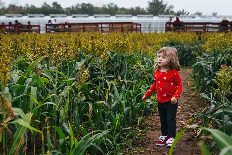 A little girl walks through a field.