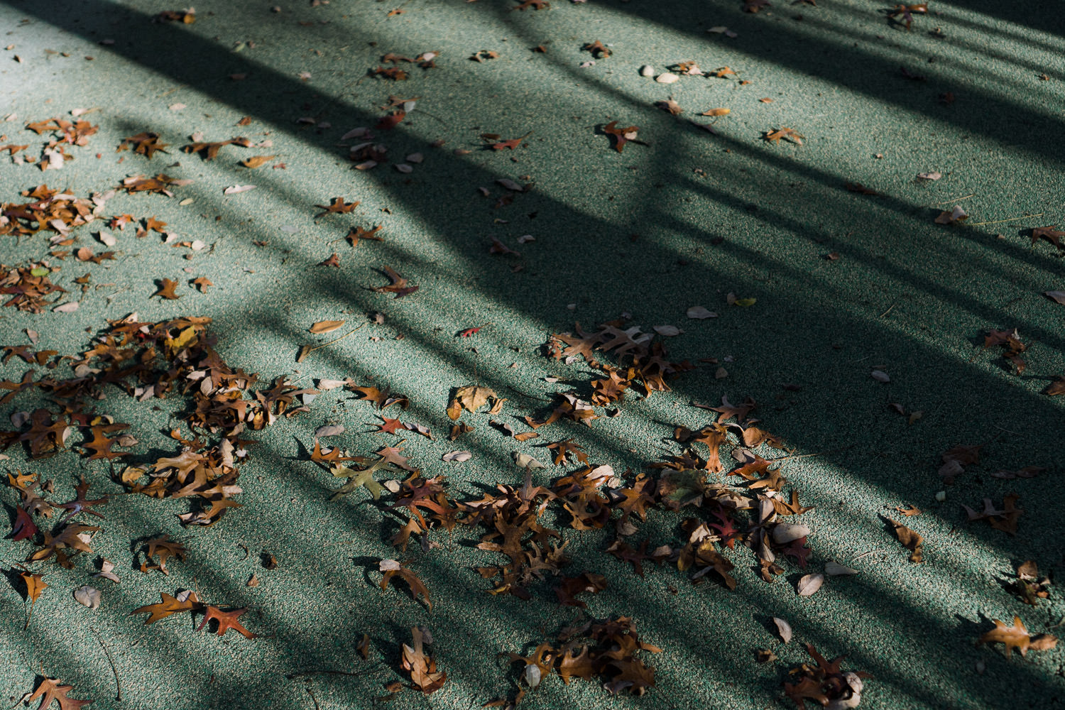 Leaves strewn across a playground.